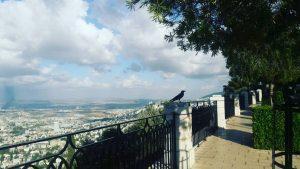 Hifa city