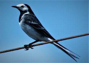Israeli Birds