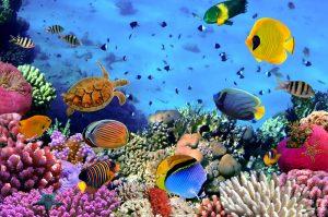 Israeli fishes